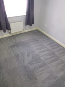 after professional carpet clean
